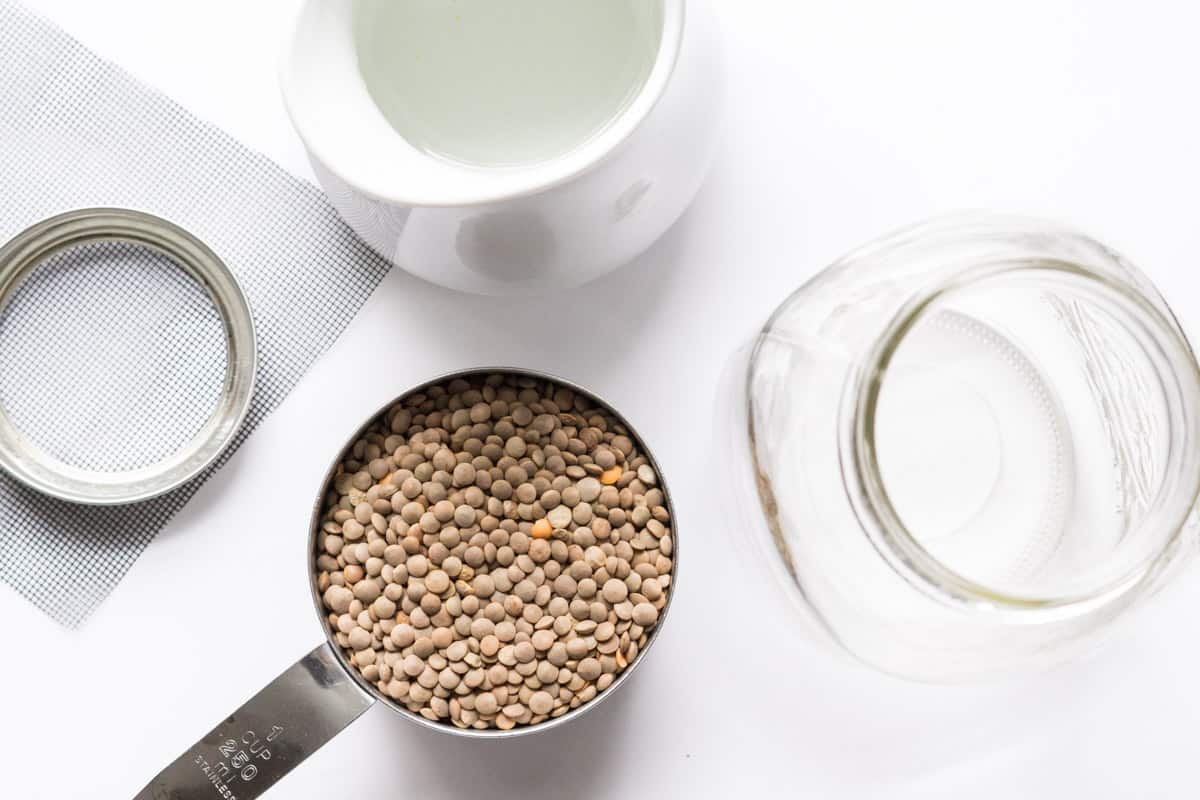 How to sprout lentils (& everything else you need to know)
